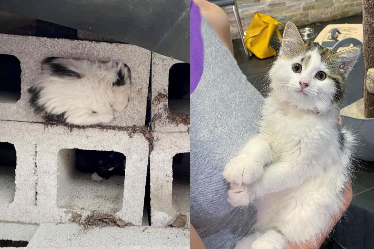 Kitten Found Hiding inside Cinder Block, Came Out of Her Shell and Really Transformed