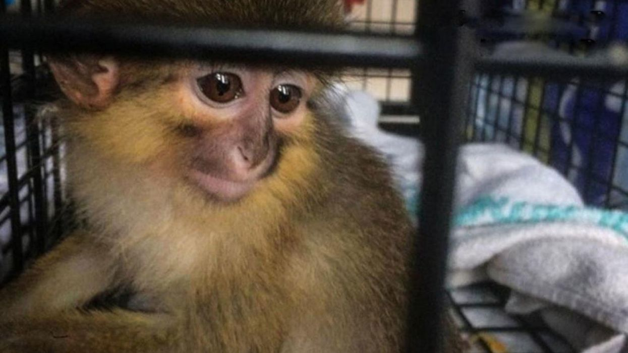 Life After Wildlife Trafficking: What Happens to Rescued Animals?