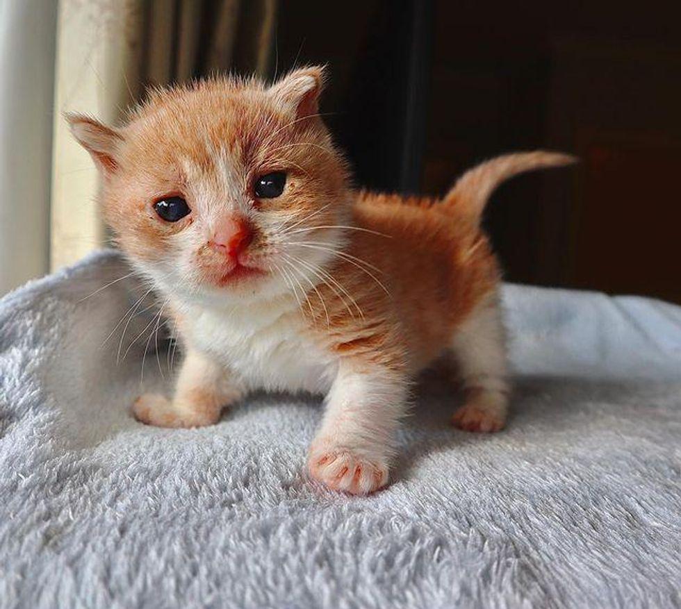small palm-sized kitten