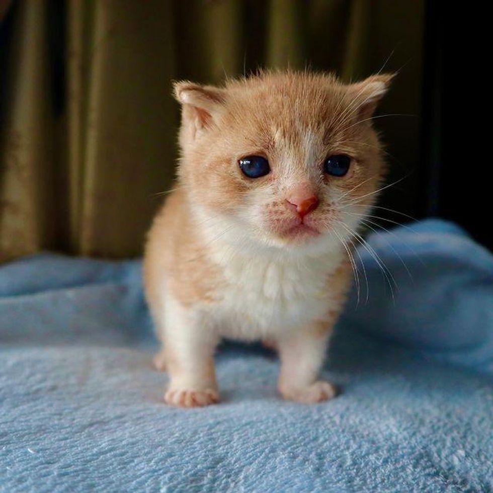 tiny kitten nugget
