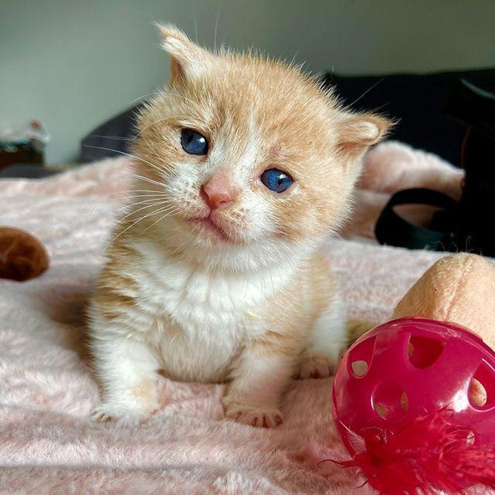 kitten with special needs, kitten with dysplasia