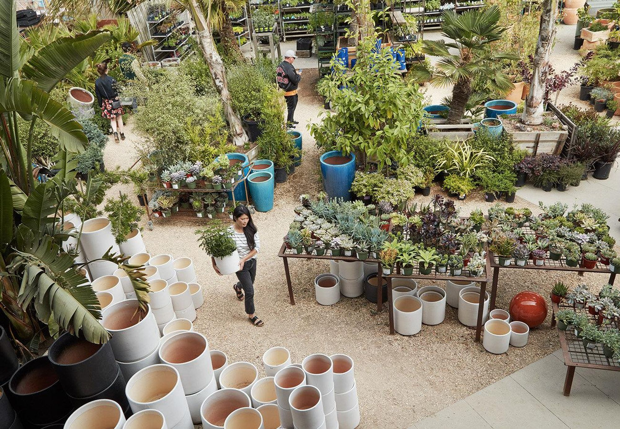 The Best Places to Buy Succulents, Cacti + Air Plants in the Bay Area