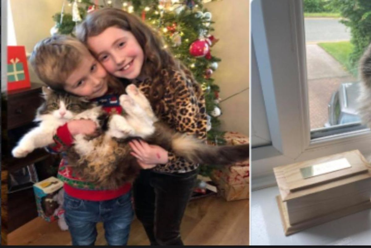 'It's a miracle': Cat that a family thought they cremated turns back up at their home