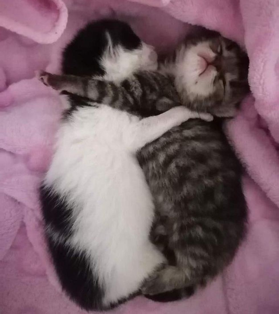cuddly kittens hugs