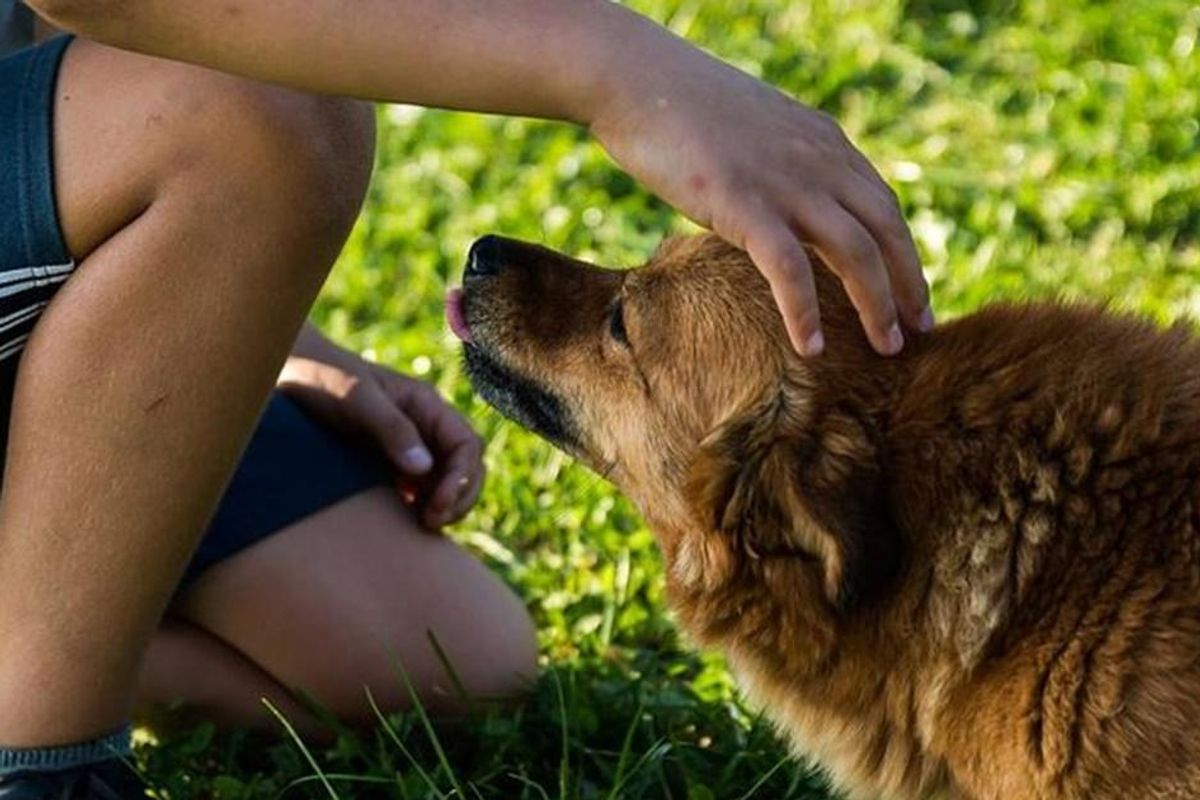 New research shows why you should always pet your dog before leaving the house