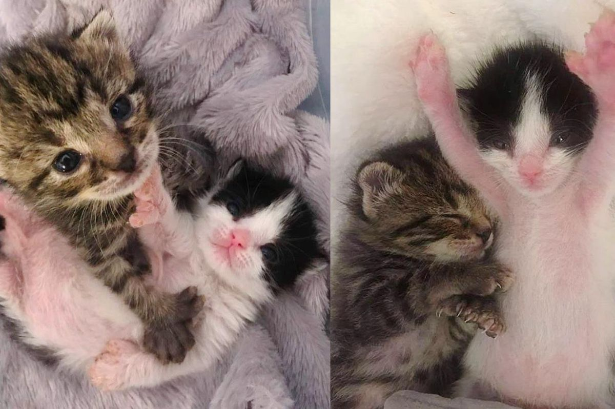 Kittens with 3 Paws and Extra Toes Share a Strong Bond After Being Found Together in Backyard