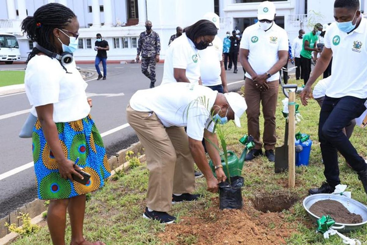 Ghana planted 5 million trees in a single day to combat deforestation and climate change