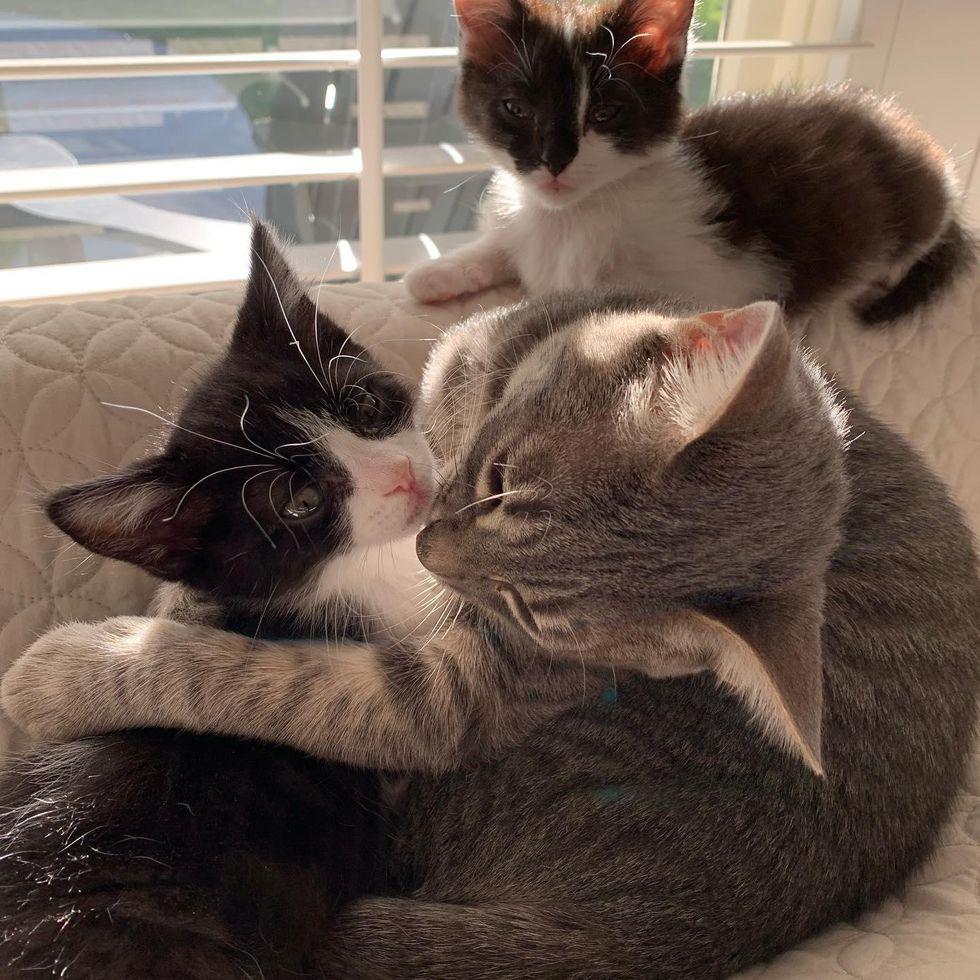 cat loves kitten