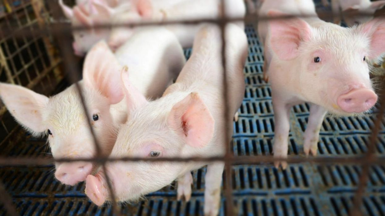 EU policymakers have voted to end caged animal farming.