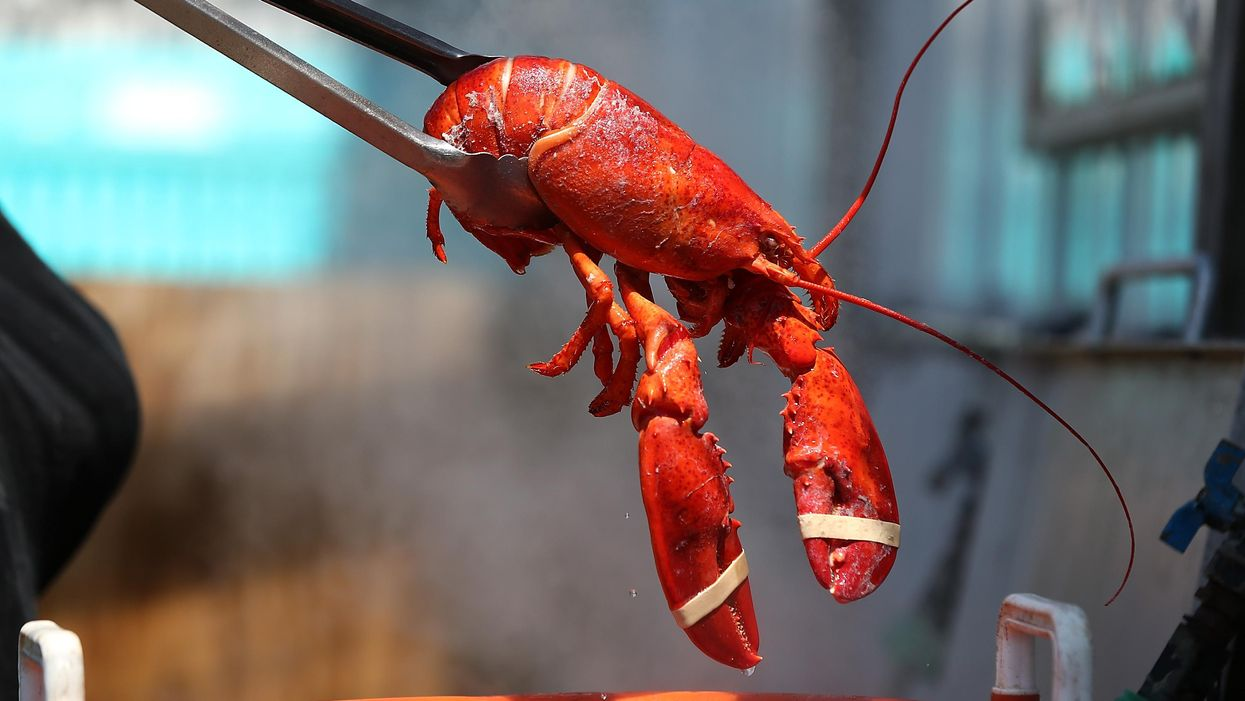 Lobsters, jellyfish, and the foolish quest for immortality