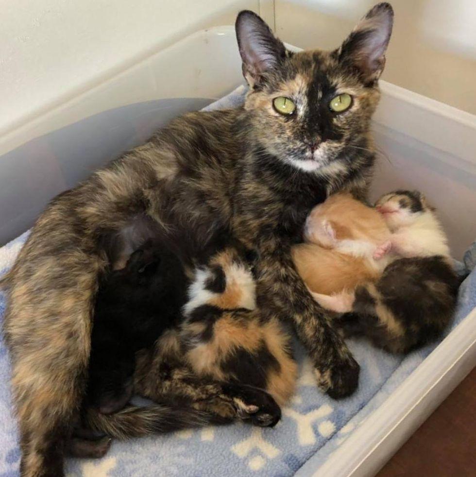 tortie cat mom