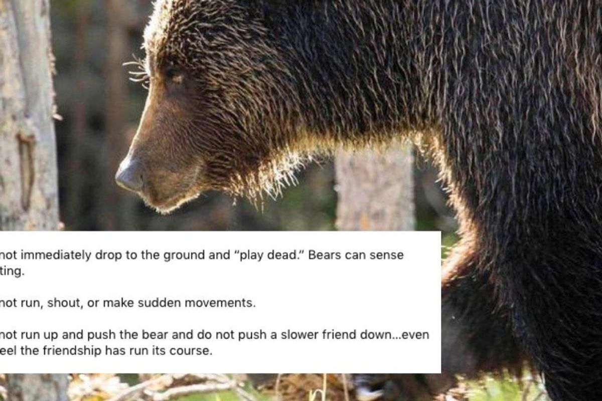 National Park Service shares helpful—and hilarious—advice for how to handle a bear encounter