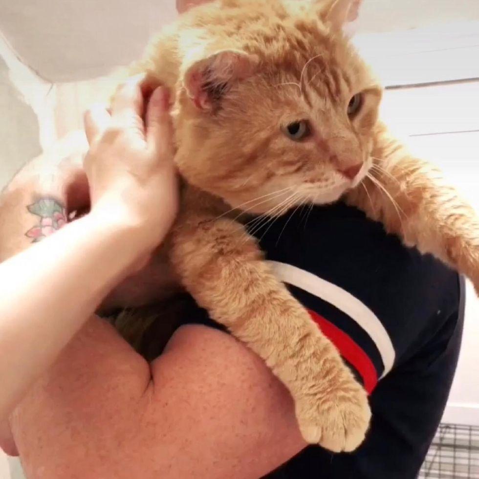cuddly orange cat