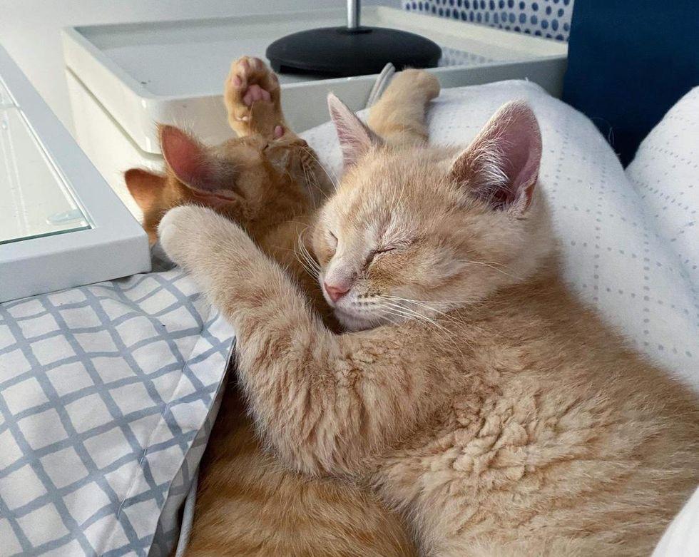 cuddly ginger kittens