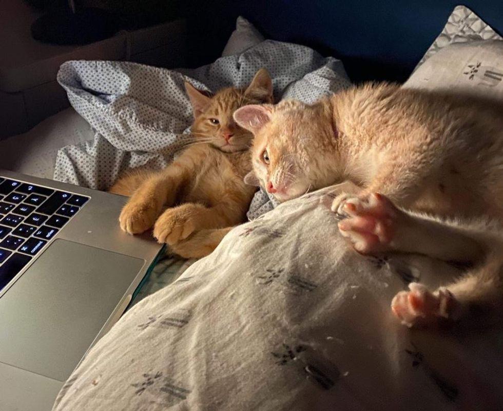 ginger kitten best friends