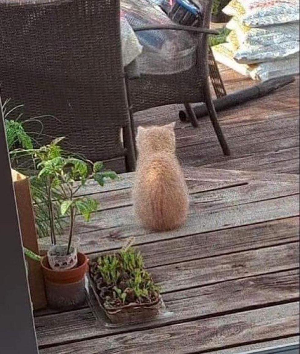 backyard stray kitten