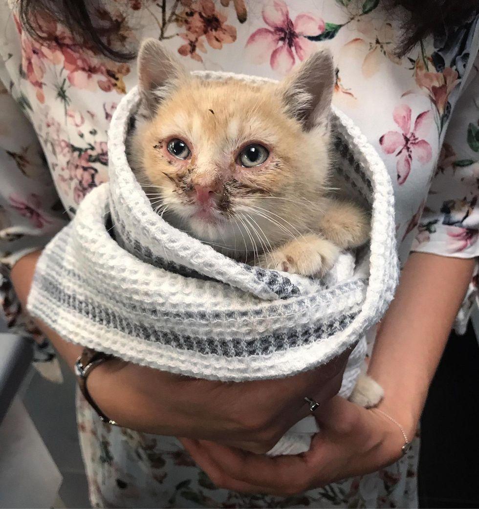rescued kitten, purrito kitten