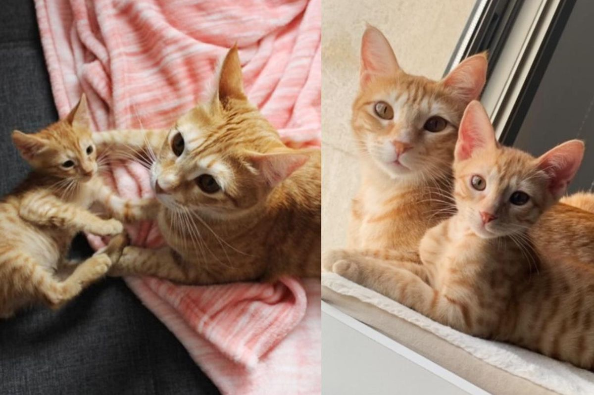 Kitten Found as a Stray Determined to Win Cat Over When They Cross Paths