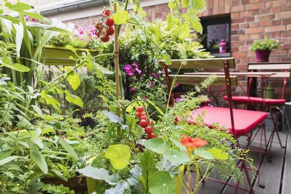 Various plants cultivated in balcony garden