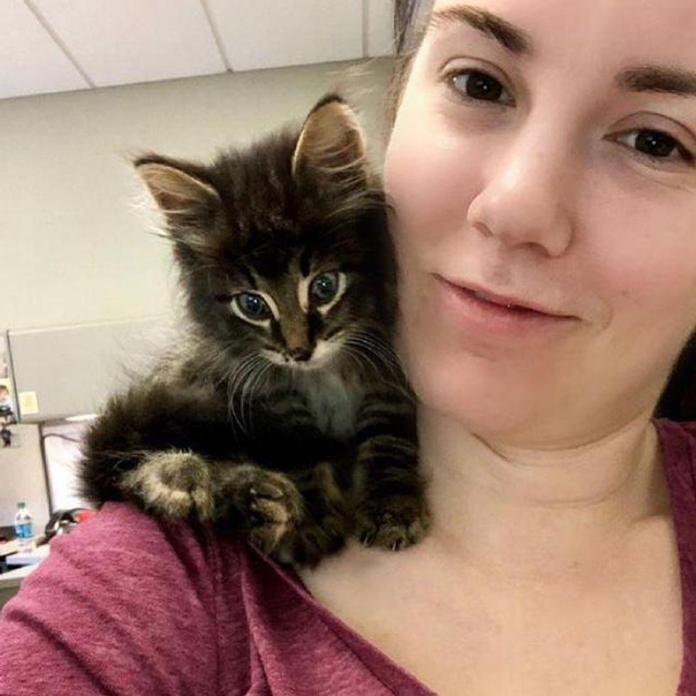 shoulder kitten, stray kitten