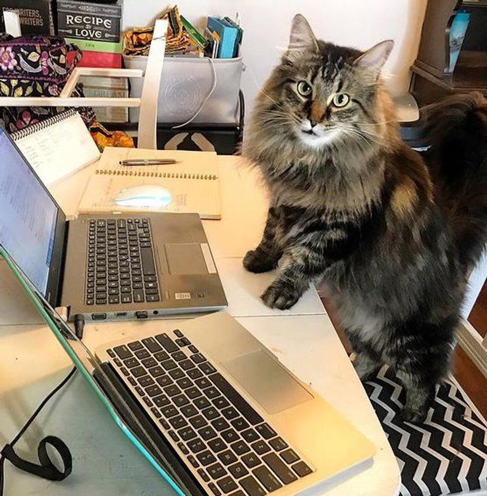 office cat supervisor