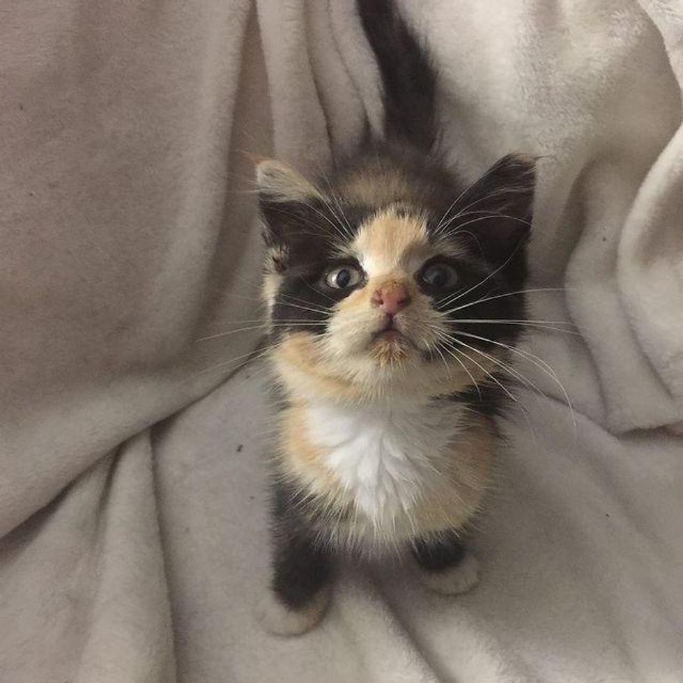stray calico kitten