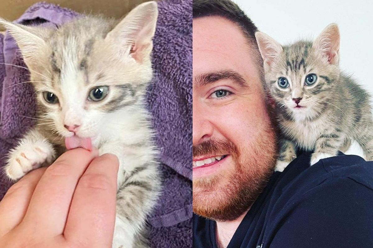 Couple Heard Kittens in a Bin While Walking Down Street and Knew They Had to Help