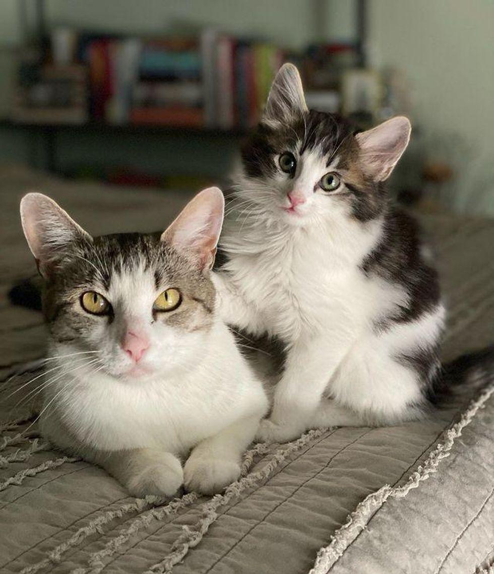 cat mom and kitten bonded
