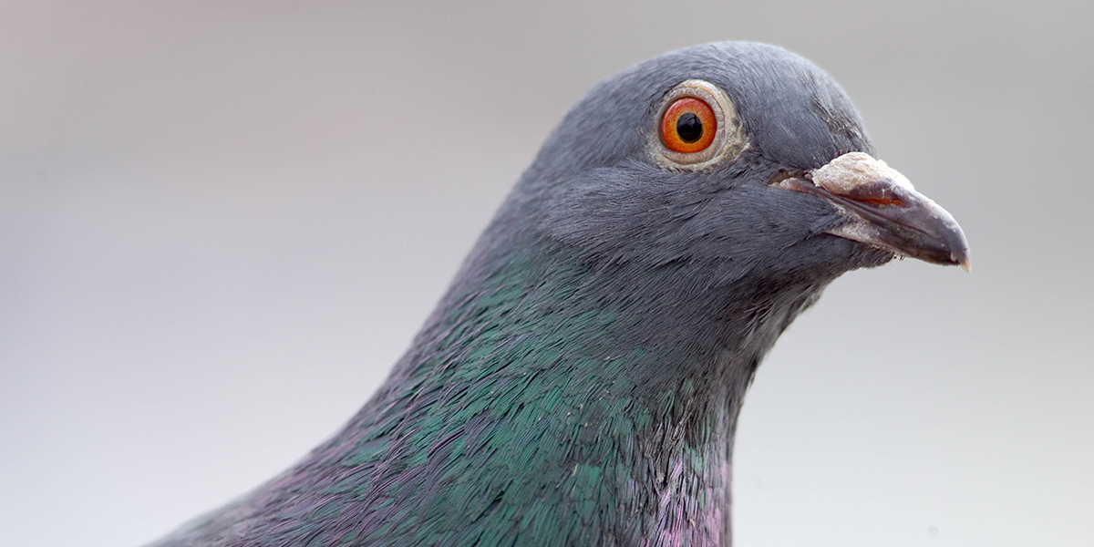 There's an America-Led Conspiracy Theory That Birds Don't Actually Exist