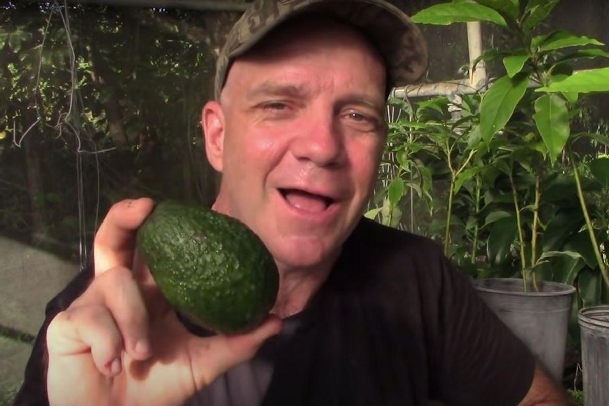 Avocado farmer explains secret why you can't grow Hass avocado trees from Hass seeds