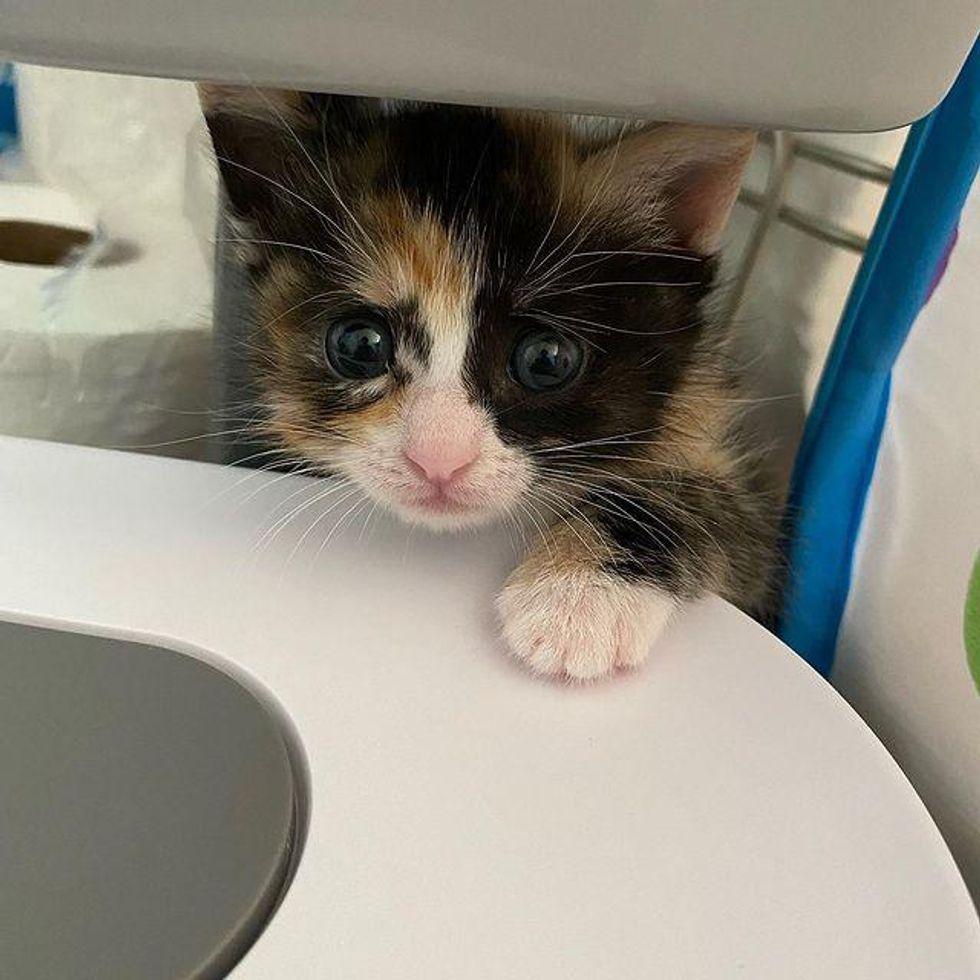 Kitten worried look