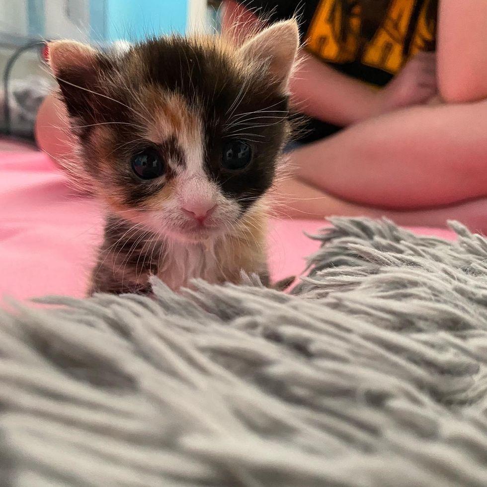 big eyes kitten