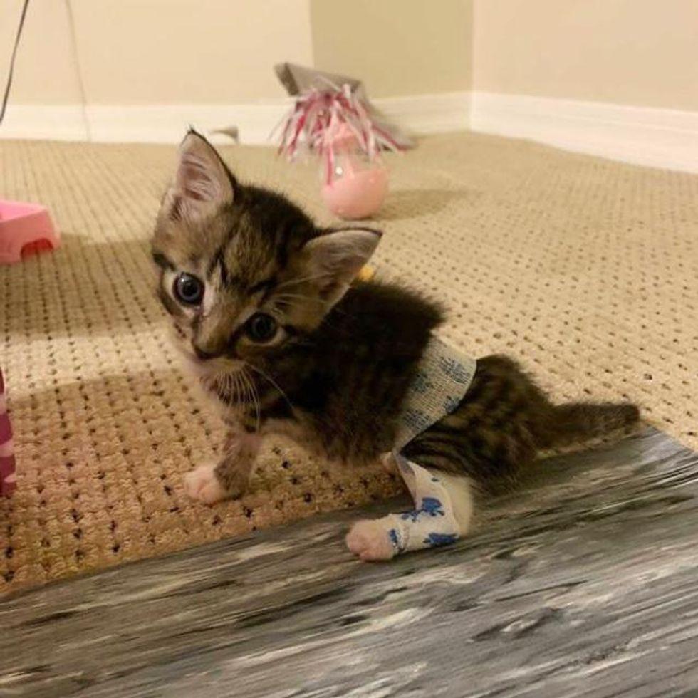 kitten splinting technique, twisted leg