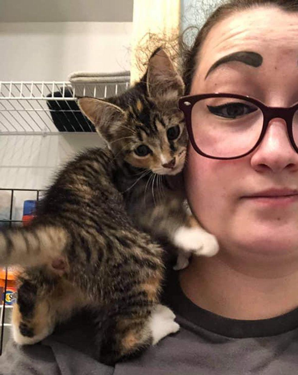 shoulder kitten torbie