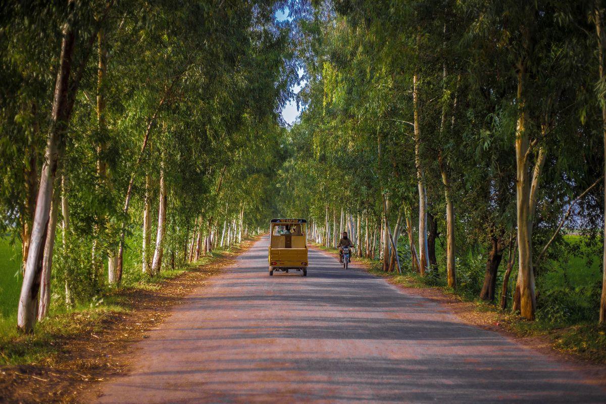 High time to reverse environmental destruction through plantation: Imran