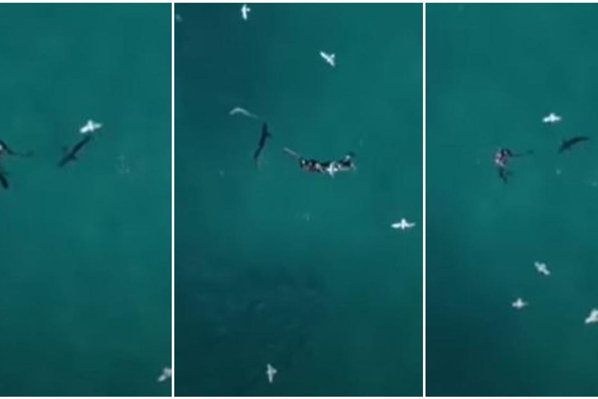 A lone fisherman was attacked by a shark. A drone cameraman saw it and stepped in.