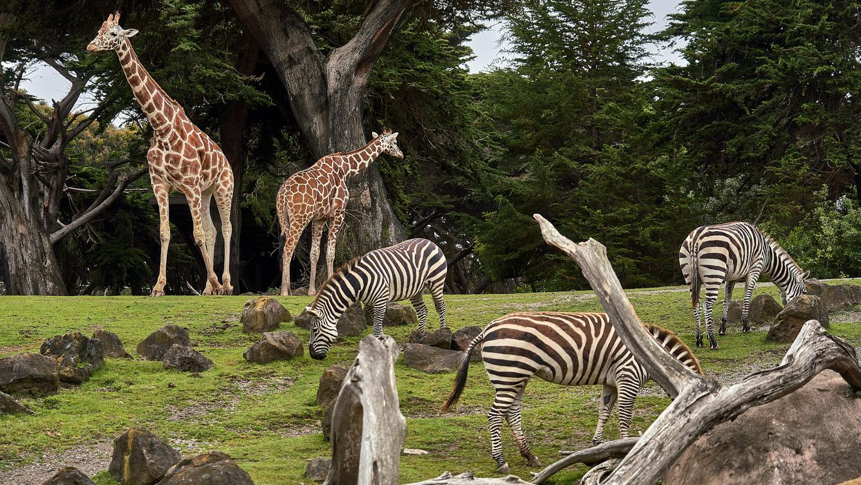 Zoo ethics: free-range prisons or centers for global conservation?