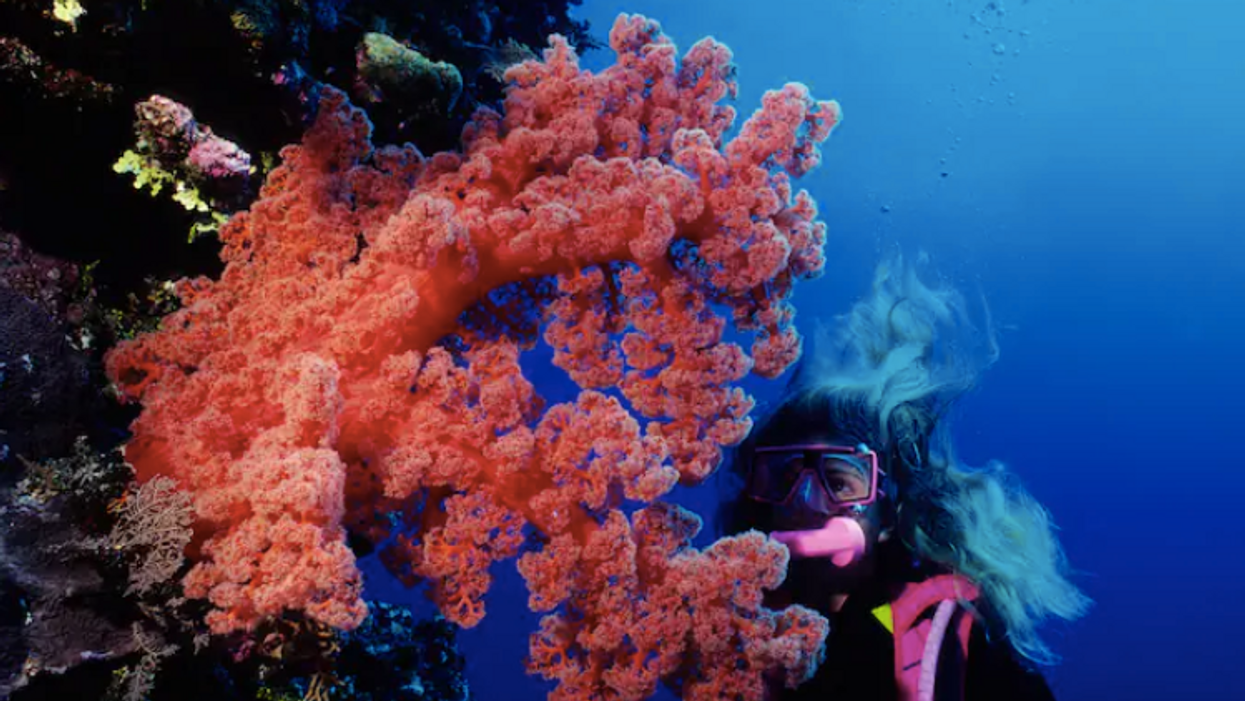 Coral reefs face disaster from climate change if we don't curb greenhouse gas emissions, report says