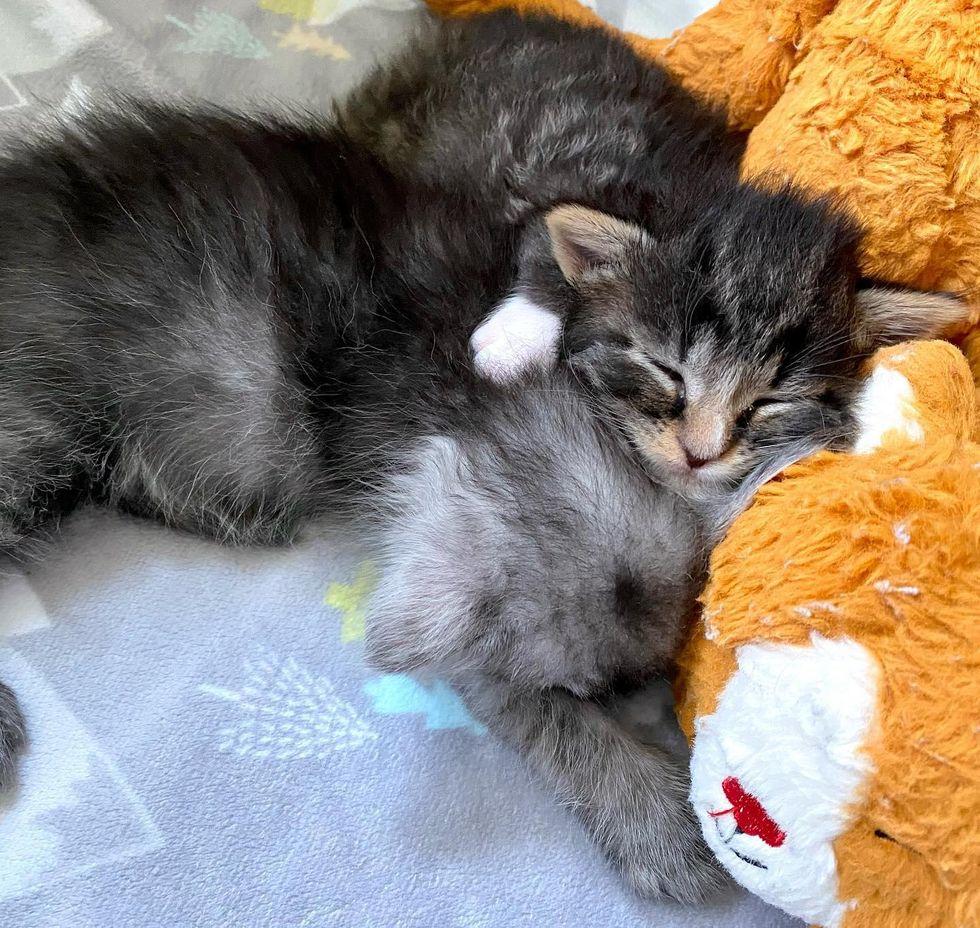 cuddly kittens