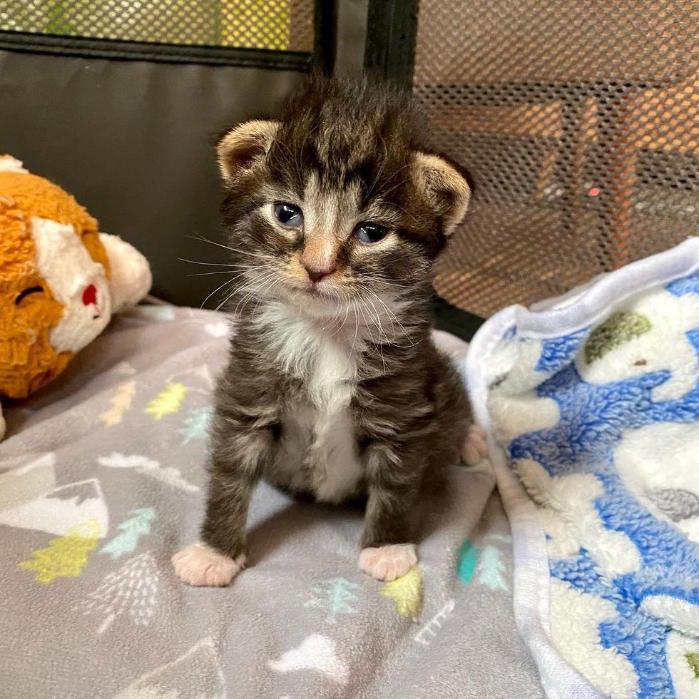 tabby kitten cute