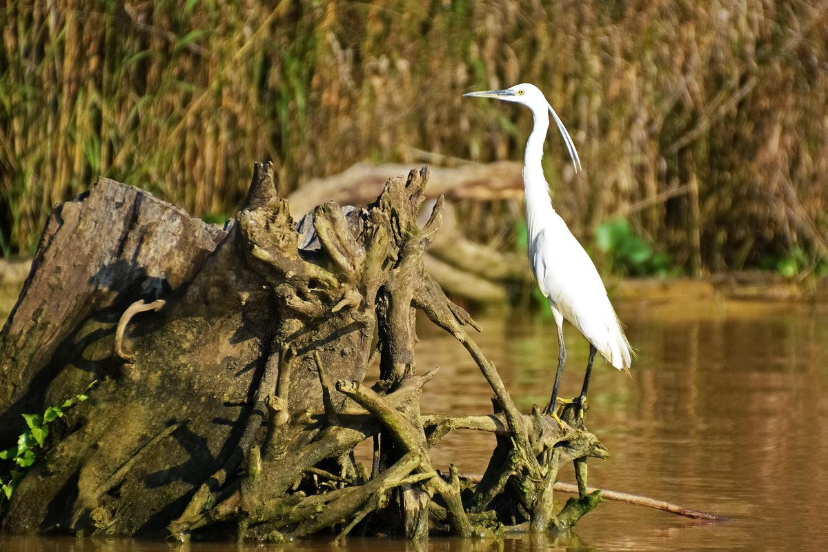 Endangered species' recovery measured by IUCN's new 'green status'