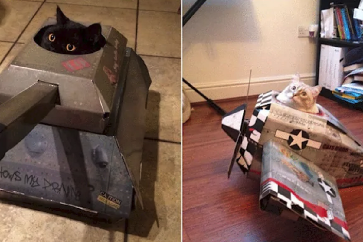 This company makes cardboard tanks to help your cat conquer the world