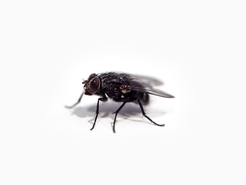 Satire On Narrative: It Was Just A Fly