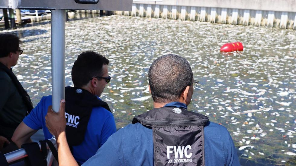 Red Tide Leaves Hundreds of Tons of Fish Dead in Florida's Tampa Bay