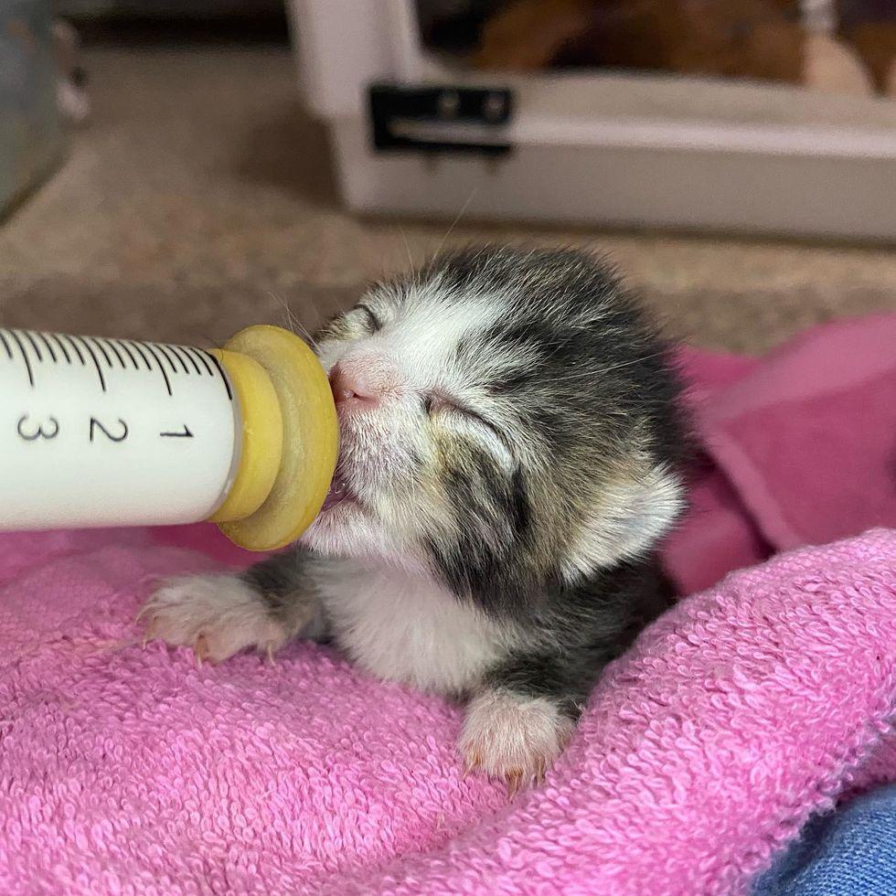 bottle kitten feeding