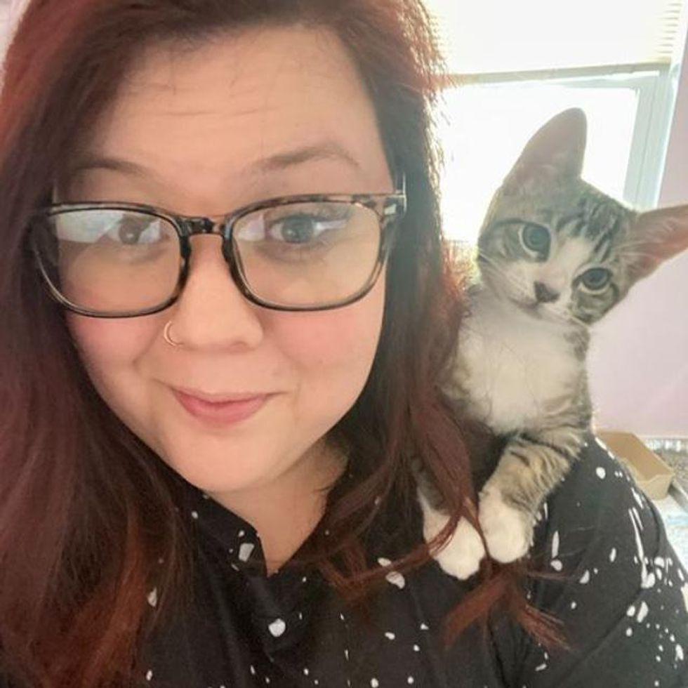 shoulder kitten, parrot cat
