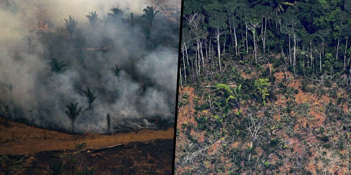 Parts of the Amazon Have Gone From Absorbing Carbon Dioxide To Emitting It