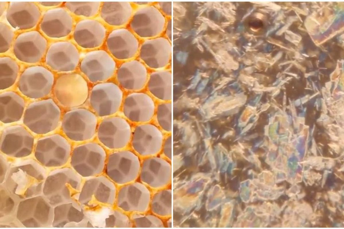 Incredibly satisfying video zooms deep inside a honeycomb cell