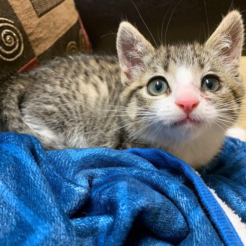 feral kitten rescue