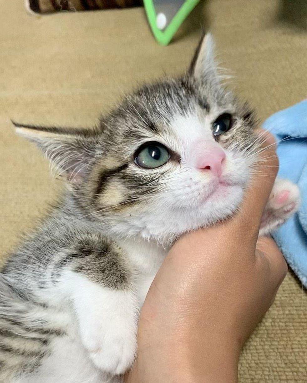 snuggly happy kitten